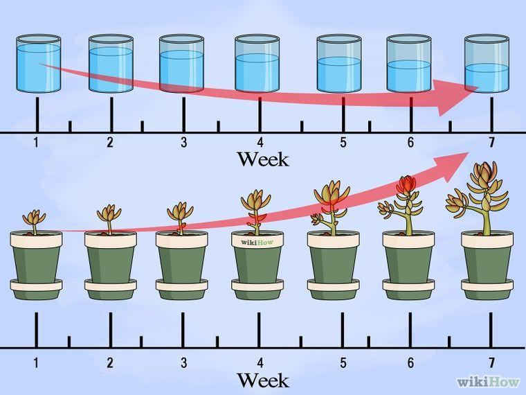 Stecklinge von Sukkulenten vermehren Plants Planting succulents, Plant cuttings und Succulents