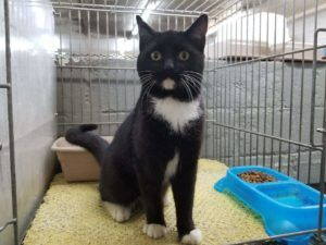 Spalding County Animal Shelter Cats Shelter Animals Please