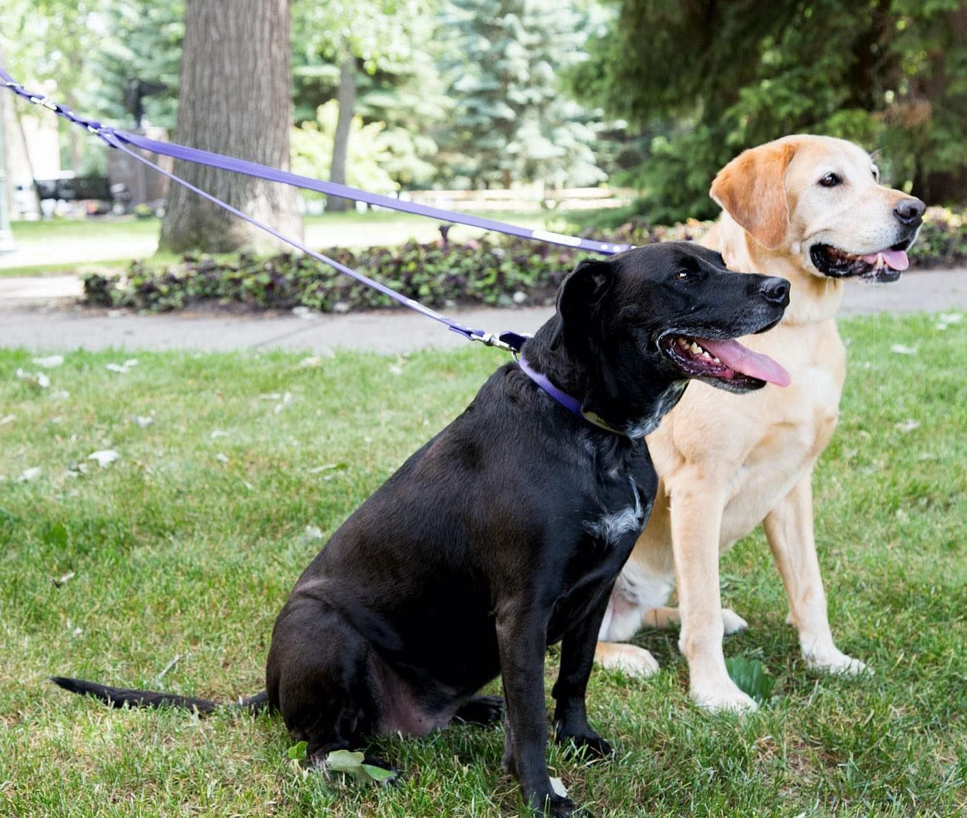 Friends Who Walk Together Stay Together Dogids Happydog Fargo Nd Fargonorthdakota Pets Dogs Happydogs Walkies Lea