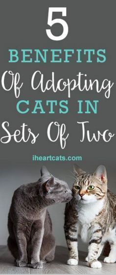 5 Benefits Of Adopting Cats In Sets Of Two Cat Adoption Cat Care Kitten Care