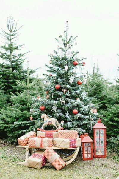 Pin By Susie Mcfarland On Christmas Outdoor Christmas Photos Outdoor Christmas Tree Christmas Tree Farm Photos