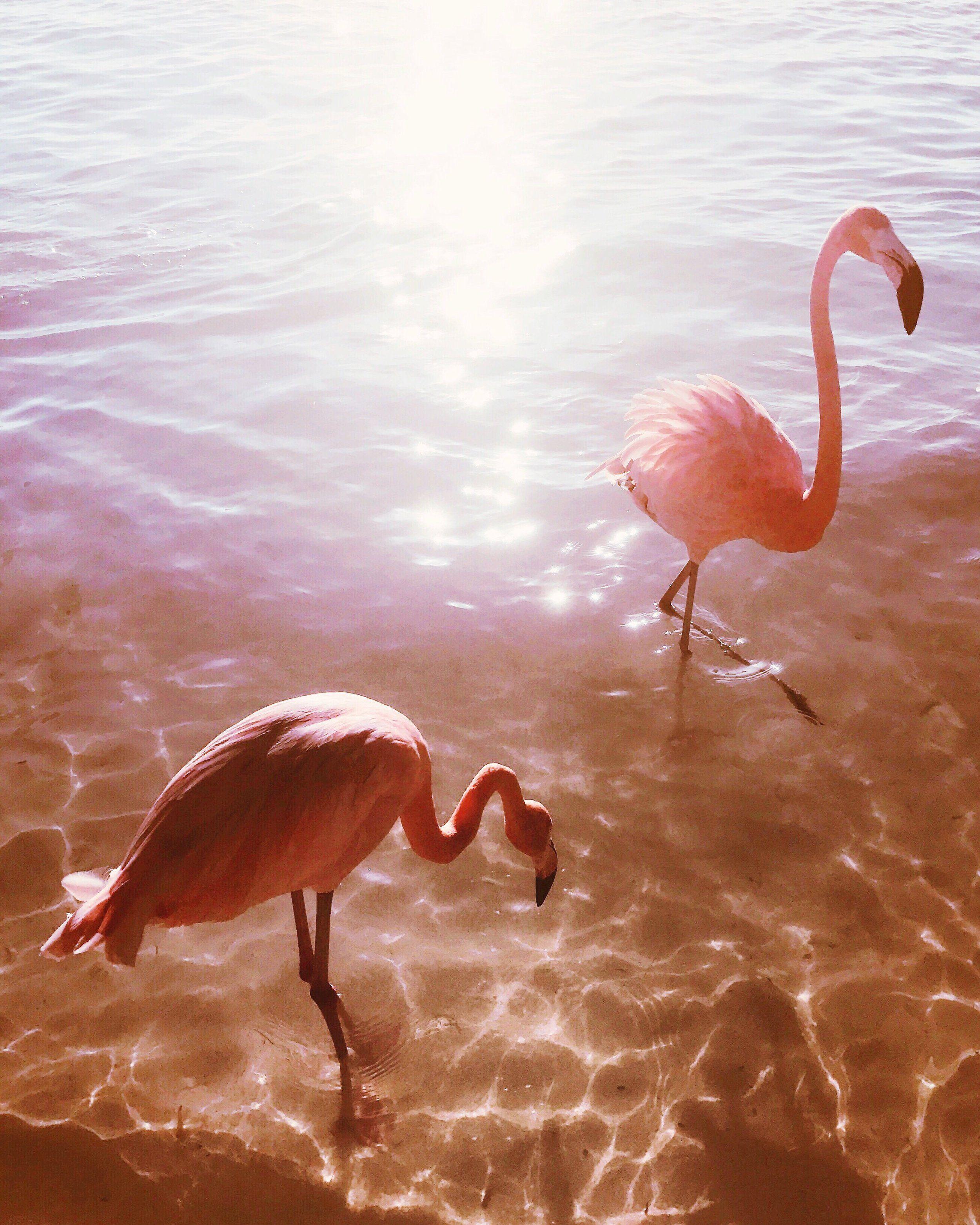 фламинго картинки и человек жизнь пятигорска кмв