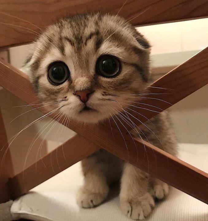 El gatito más tierno que verás hoy Wooden Accessories Pinterest - visitor sign in sheet template