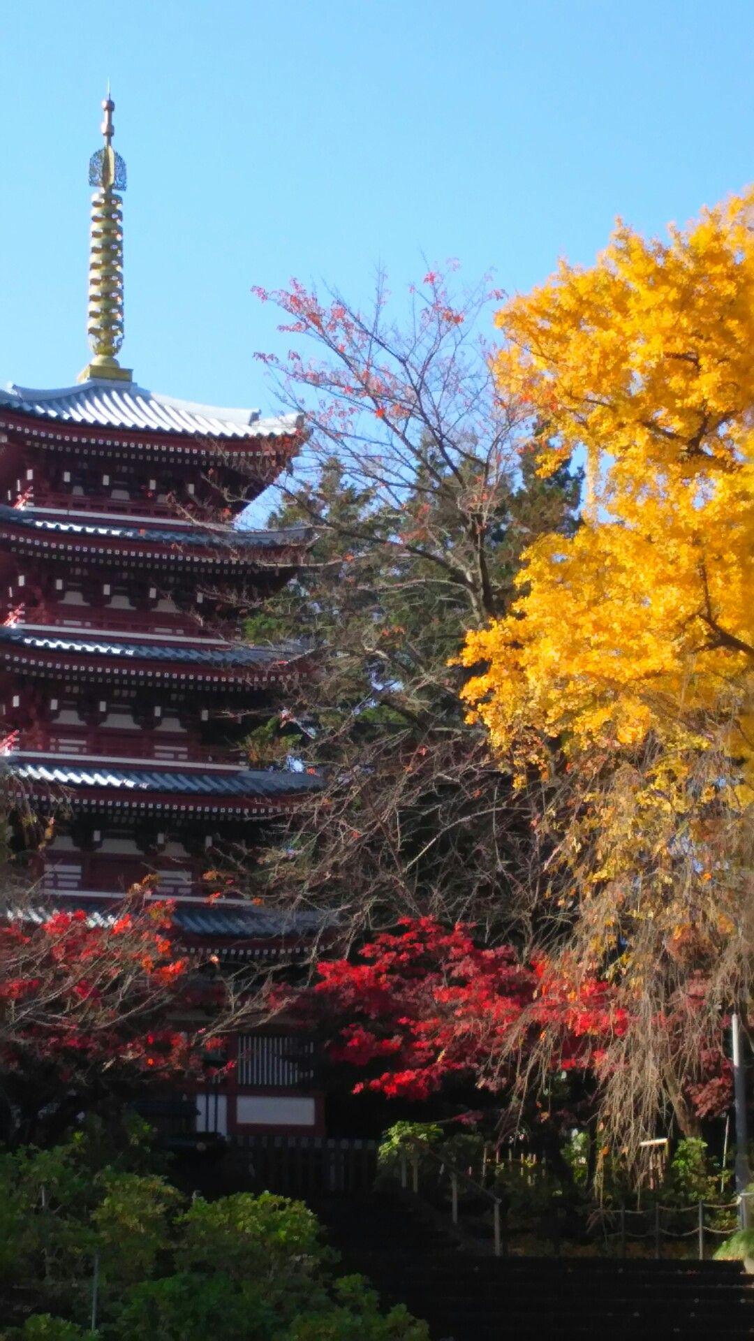 autumn.chiba.japan