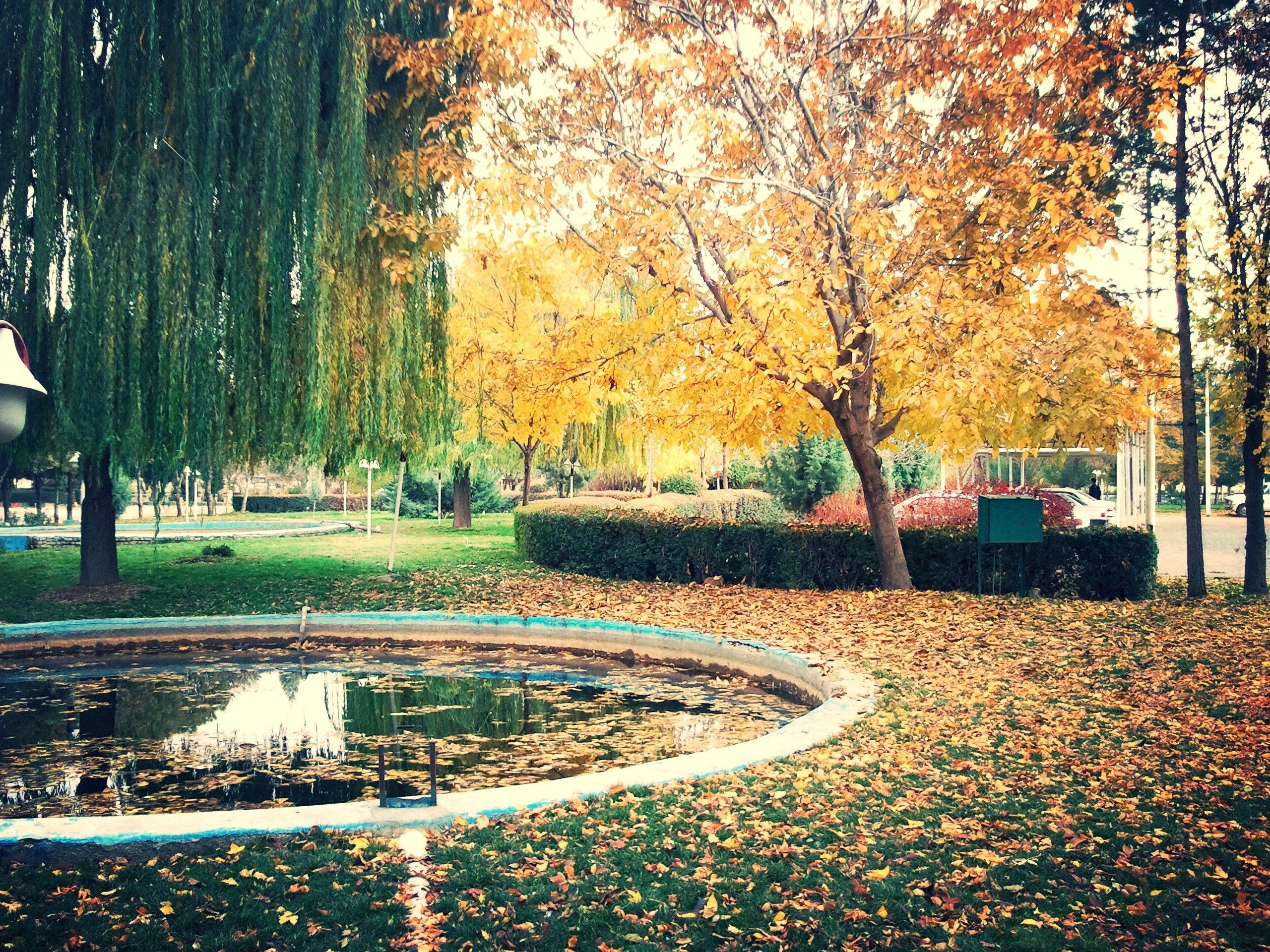 Iran Kermanshah Fall Trees Nature Wallpapers Hd Desktop And Mobile Backgrounds Nature Autumn Scenery Green Nature