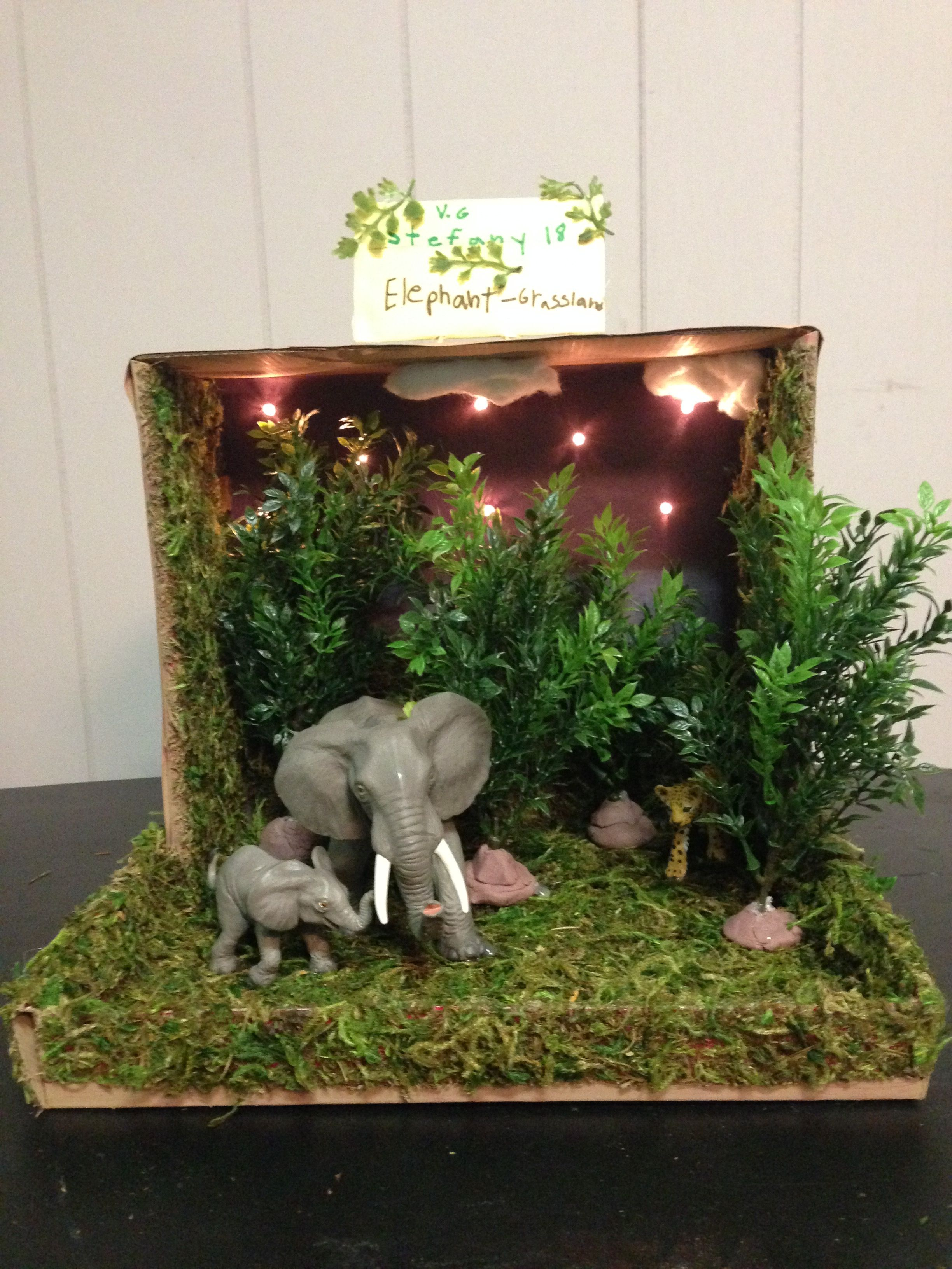 Elephant grassland habitat shoe box project our projects for Habitat container