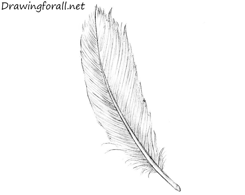 How to draw a feather tatuajes de plumas pinterest feathers