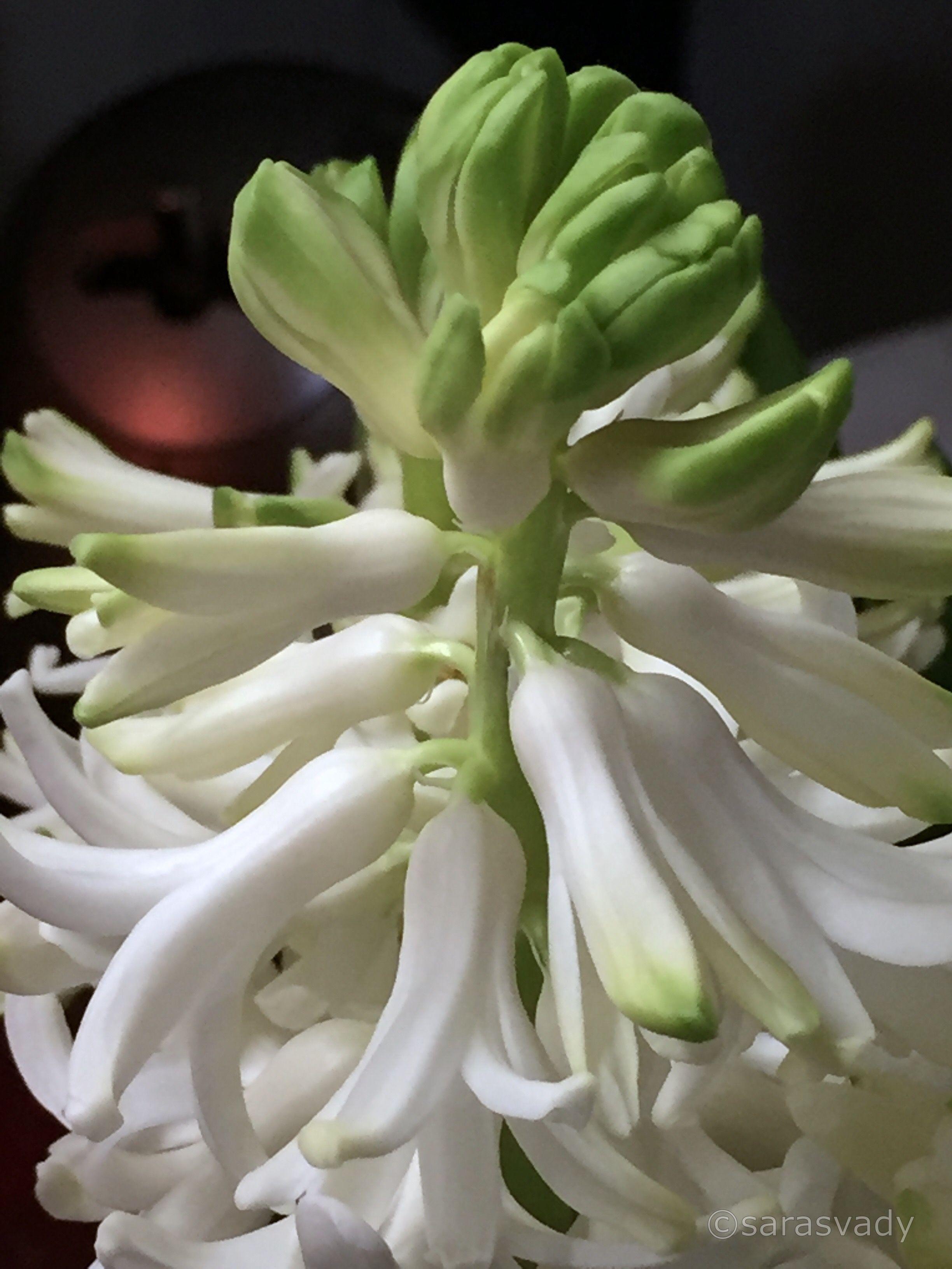 Epingle Par Maria Perez Sur Flores Avec Images Fleurs Fleurs