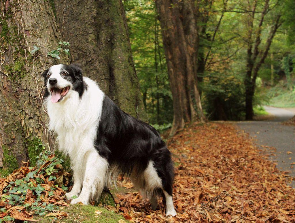 40 52 Poser Worlds Biggest Dog Big Dogs Dog Show