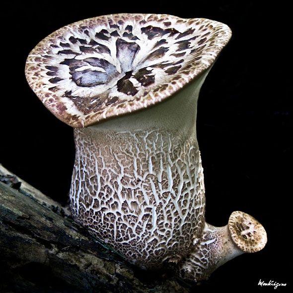 Mushroom on Kendall Katwalk | Stuffed mushrooms, Autumn