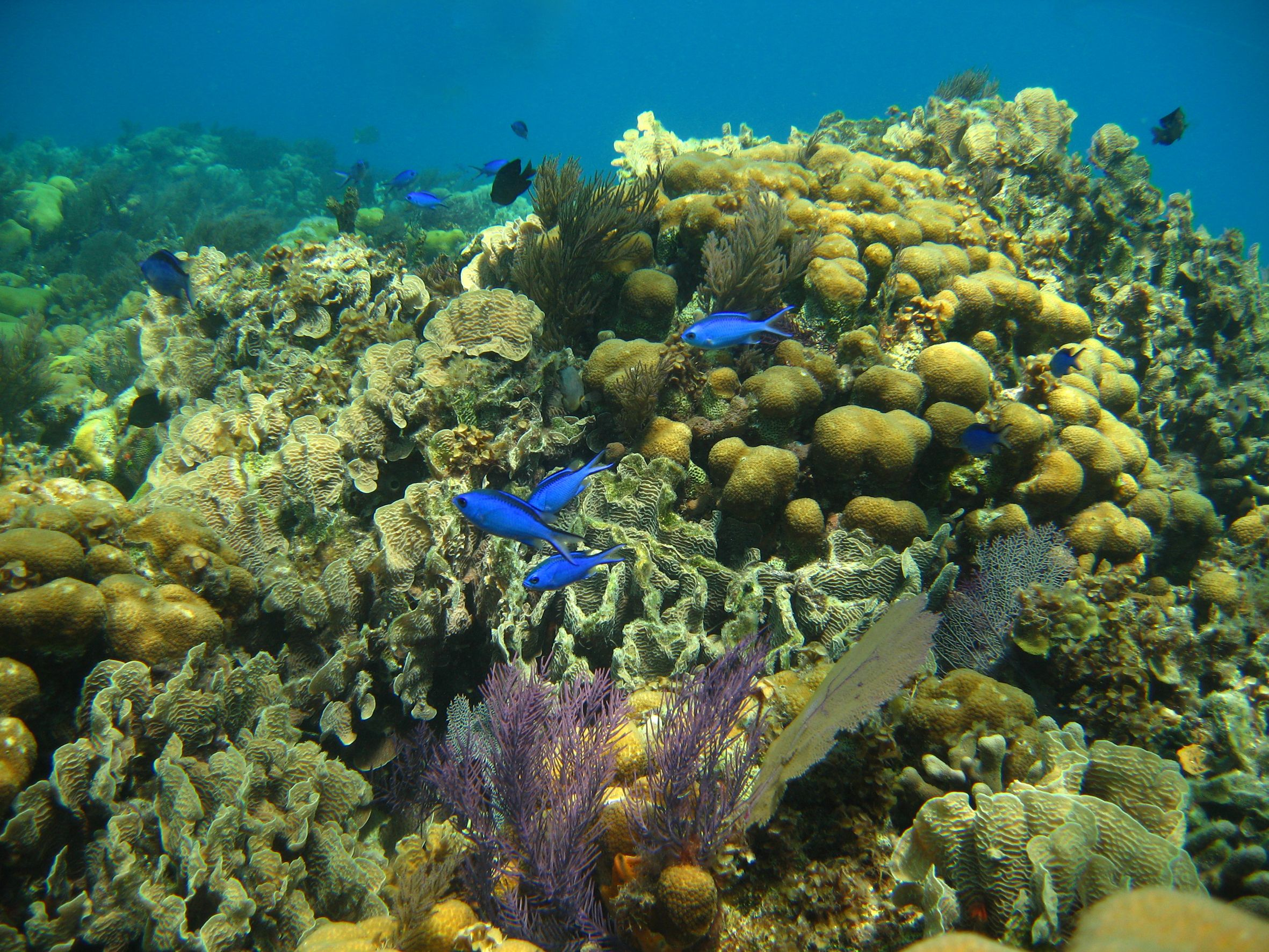 Coral Reefs in the Caribbean | ... Press Material - A clear human footprint on the Caribbean coral reefs