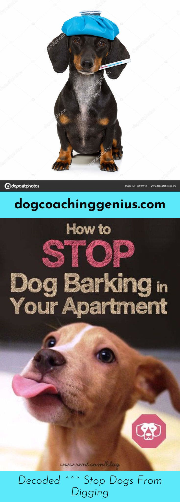 Discover more about dog barking funny stop dog barking