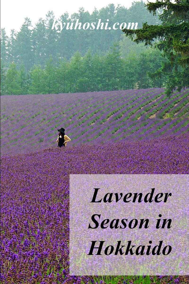 Lavender Season In Hokkaido Hokkaido Japan Summer Japan Travel
