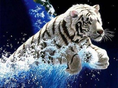 Fondo De Pantalla En Movimiento Para Usar Y Descargar Tiger Wallpaper Tiger Pictures Animal Wallpaper