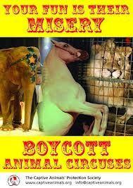 Boycott Animal Circuses