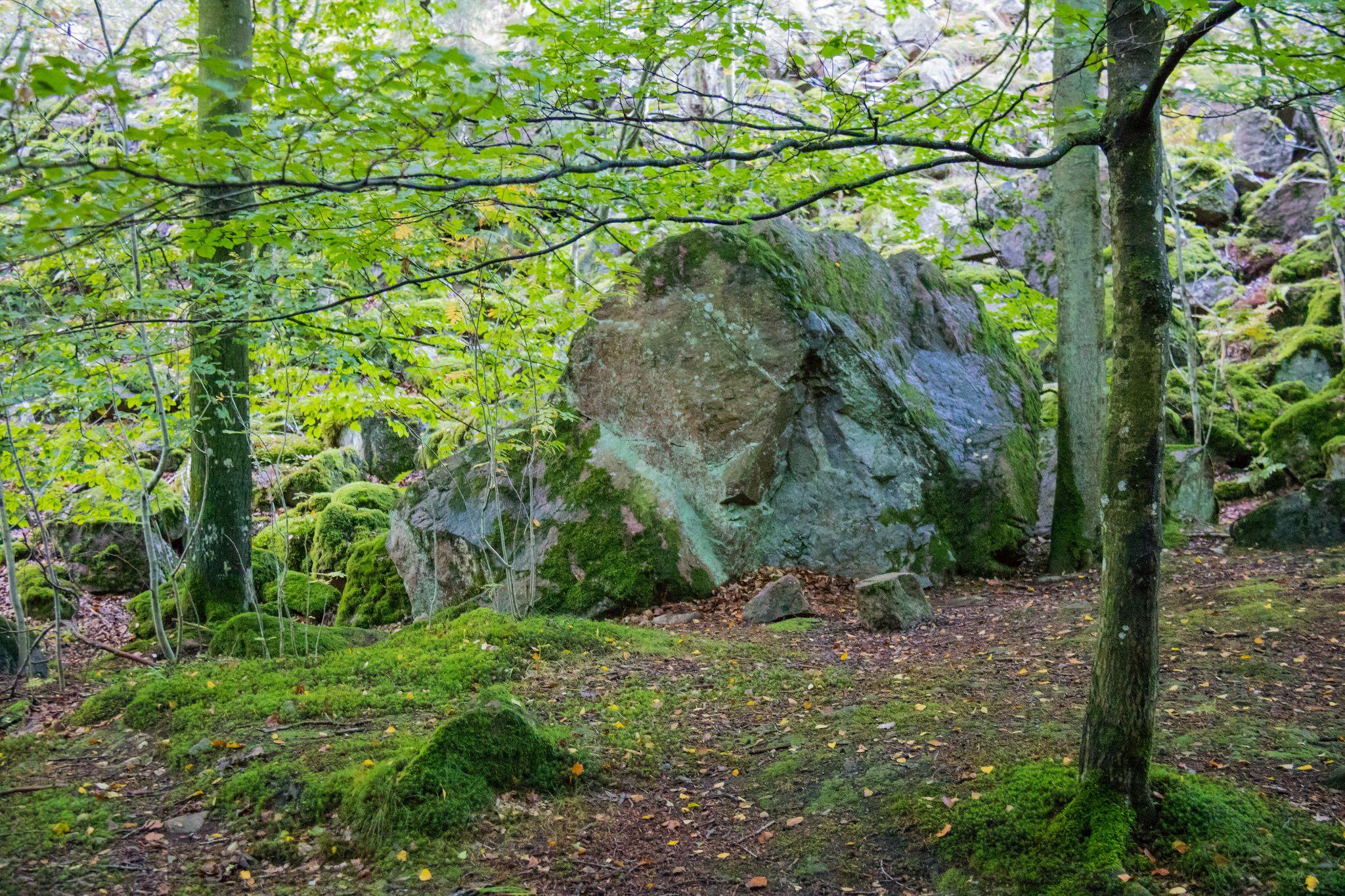 Rocks Woodland Plants Tree