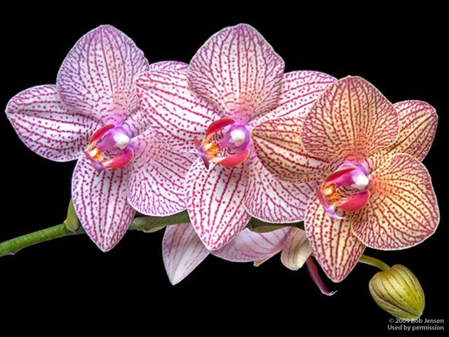 Orchids—A Bouquet of Adaptations | Orchid, Plants and Flowers