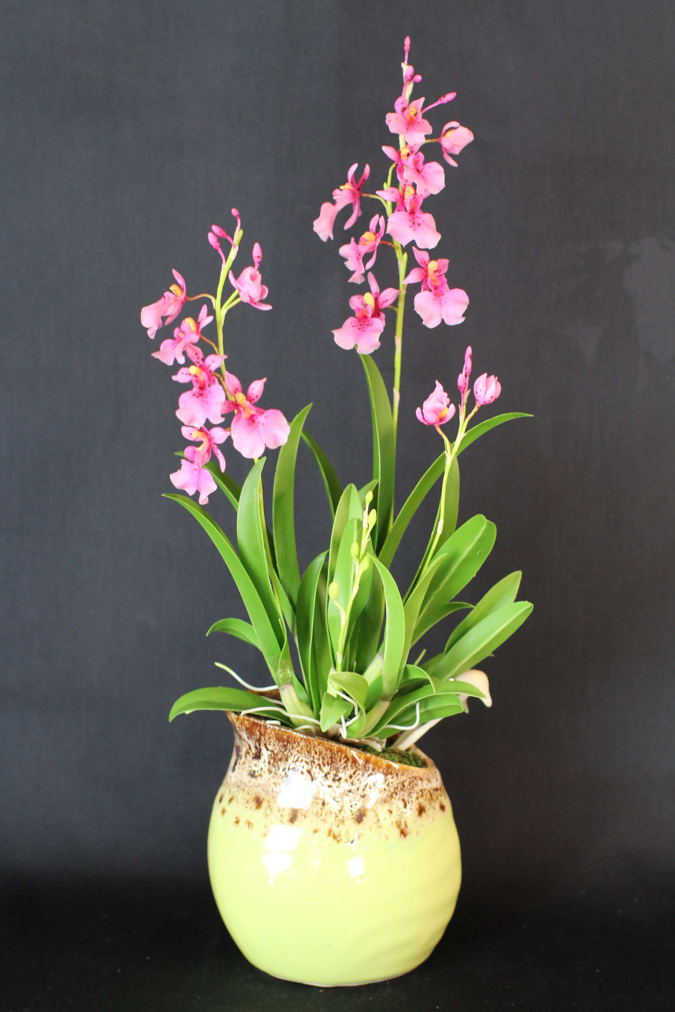 Oncidium in 2020 Oncidium, Orchids, Art and craft shows