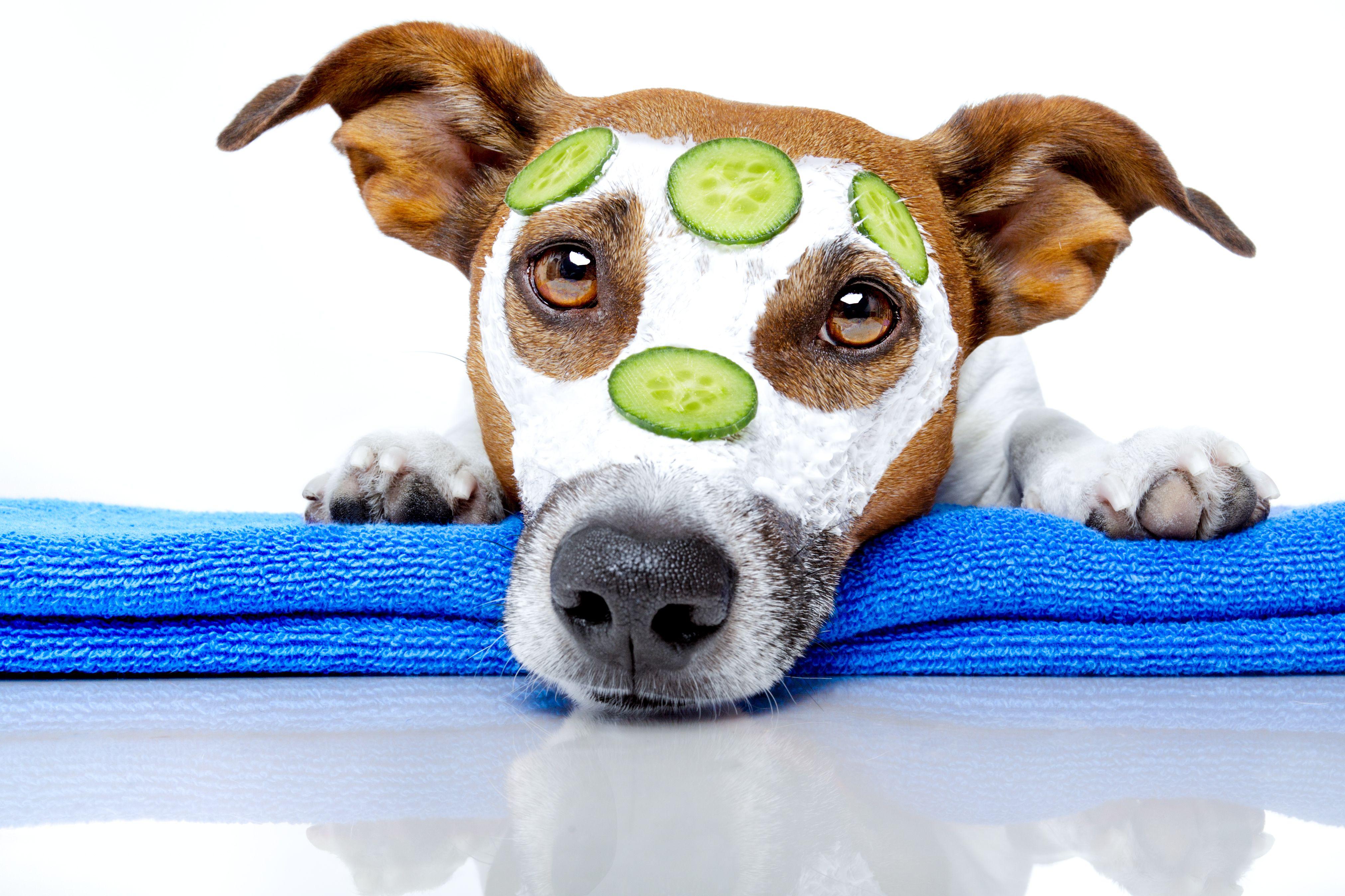 Diy doggy shampoo diyoilchick diy w essential oils pinterest diy doggy shampoo diyoilchick solutioingenieria Gallery