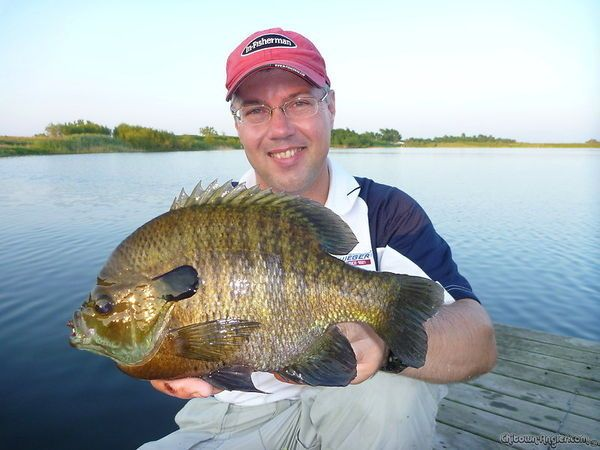 Biggest bluegill ever caught in the world chicago for Chicago fishing report