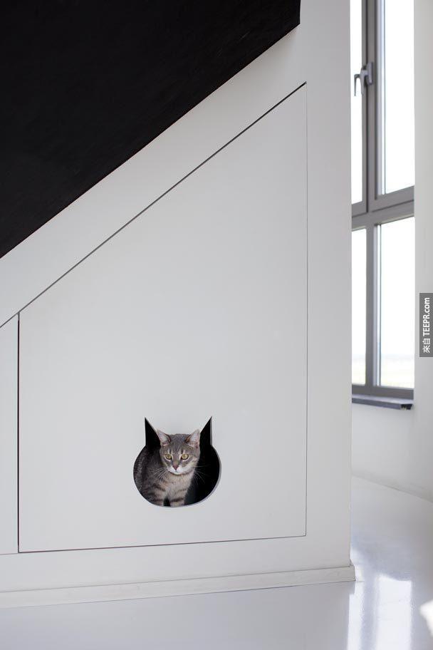 即使是他的貓的空間也有特別的設計。
