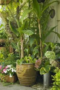 Image detail for -container gardening picture of brightly colored plantings in garden ...