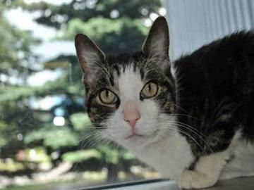 A647791 The Cat On Allpaws Com Cat Adoption Cats Cute Cats