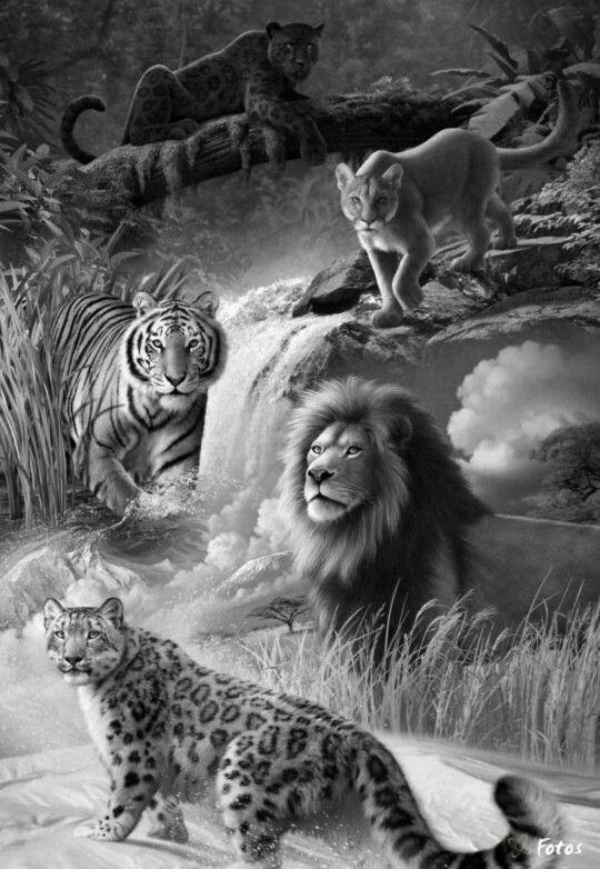 Paroles Animaux animaux par Michel Delpech - …