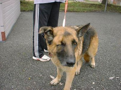 This Is Just Wrong Athens Tn Military German Shepherd Dog At