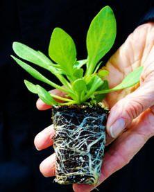 10 tips bij het kopen van planten - waarop letten bij het kopen van planten