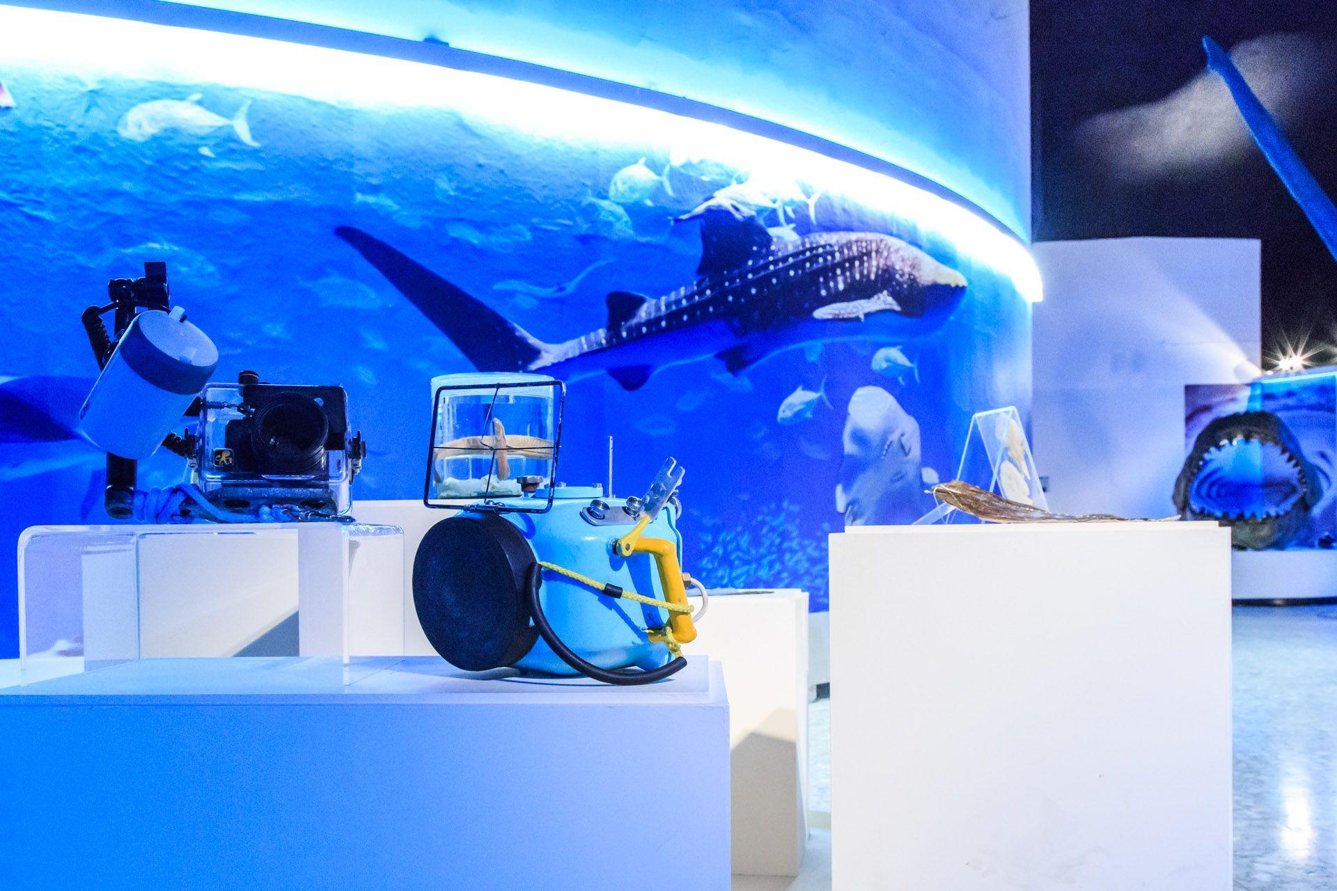 Los visitantes a la exhibición podrán comparar su tamaño con las siluetas de estos animales, observar mandíbulas originales de diferentes ejemplares y tocar una piel real de tiburón zorro.