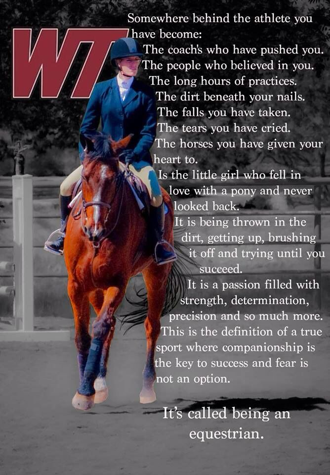 Somewhere Behind The Athlete You Have Become Inspirational Horse Quotes Horse Quotes Equestrian Life
