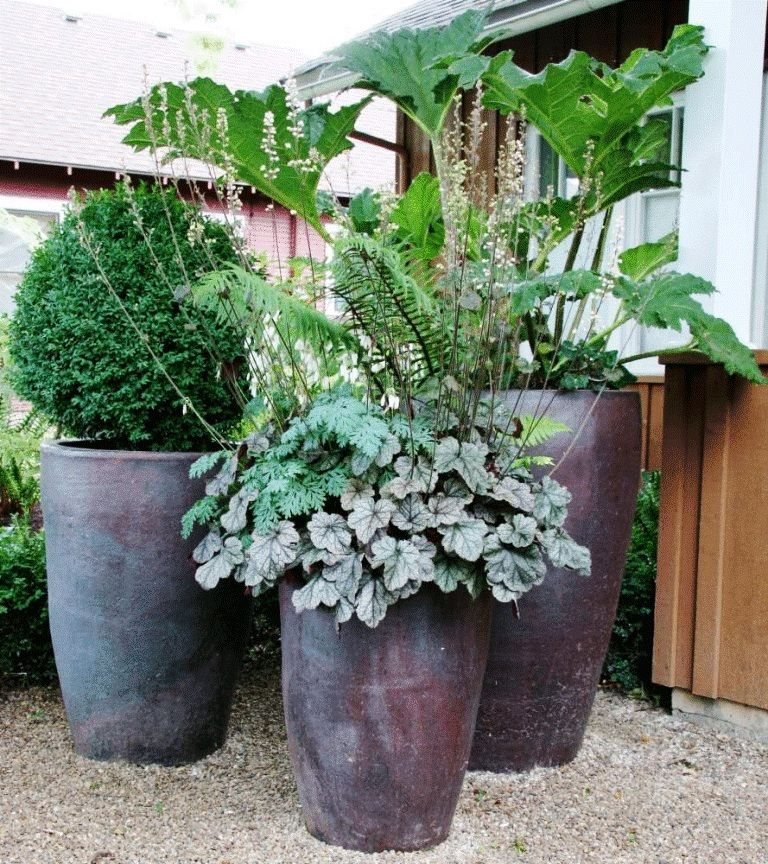 Image of Potted Plants Shade Container Garden Potted