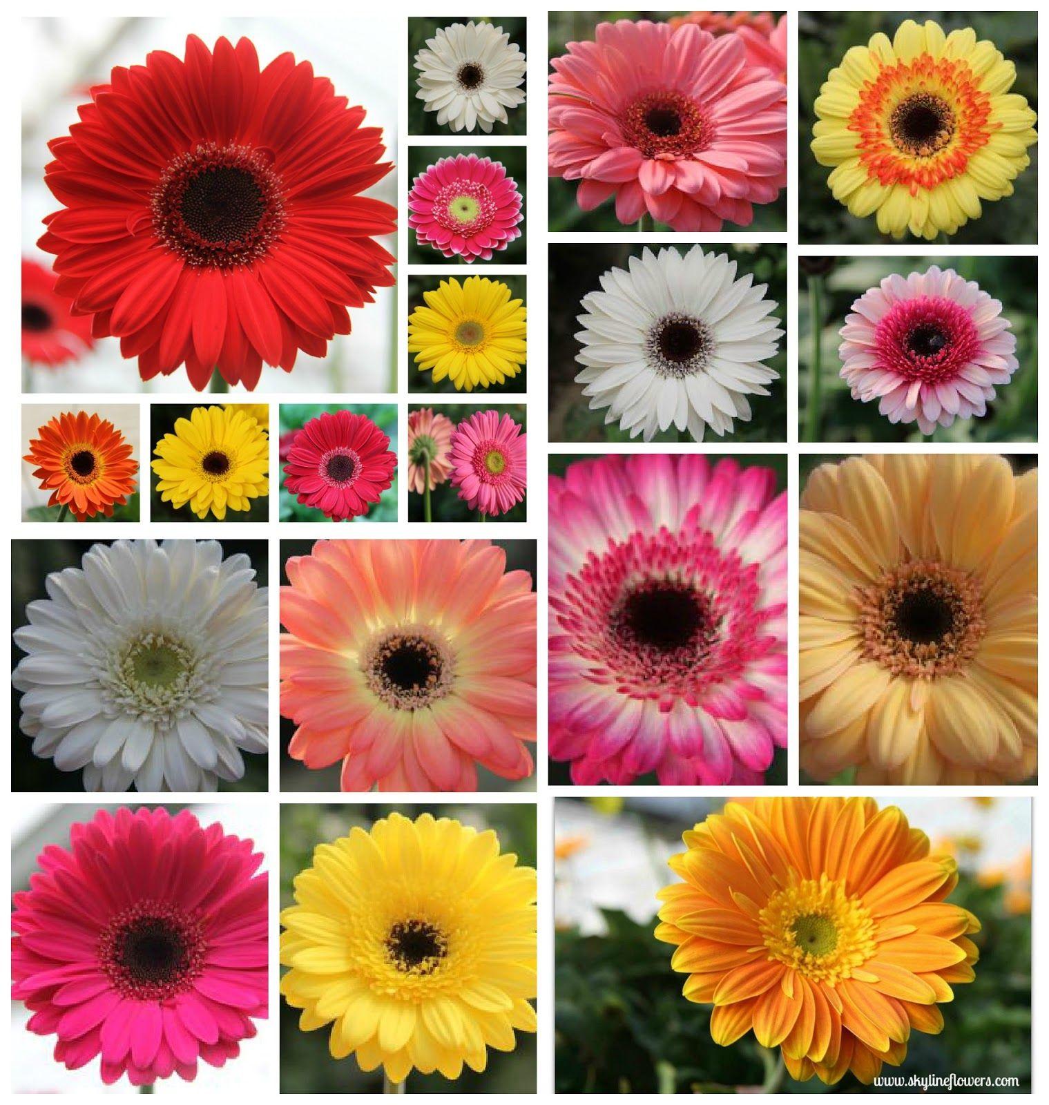 Sri Lanka Fresh Flowers From Nuwara Eliya Fresh Flowers Flowers Paper Flowers