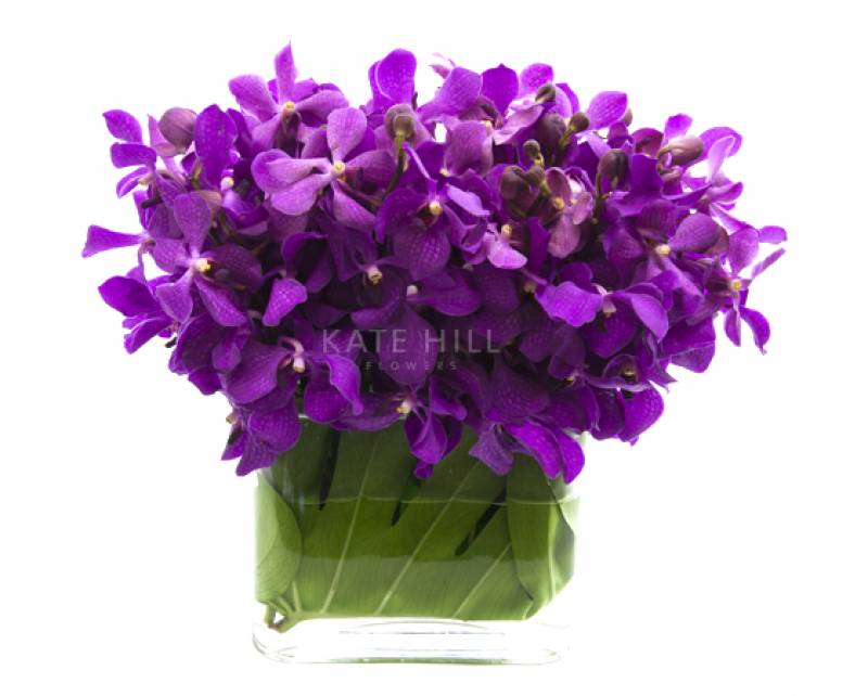 Kate Hill Flowers Flower Delivery Melbourne Order Flowers Online And Send Flowers Melbourne Bold Mokara Orchid Vase D Flower Delivery Orchid Vase Flowers