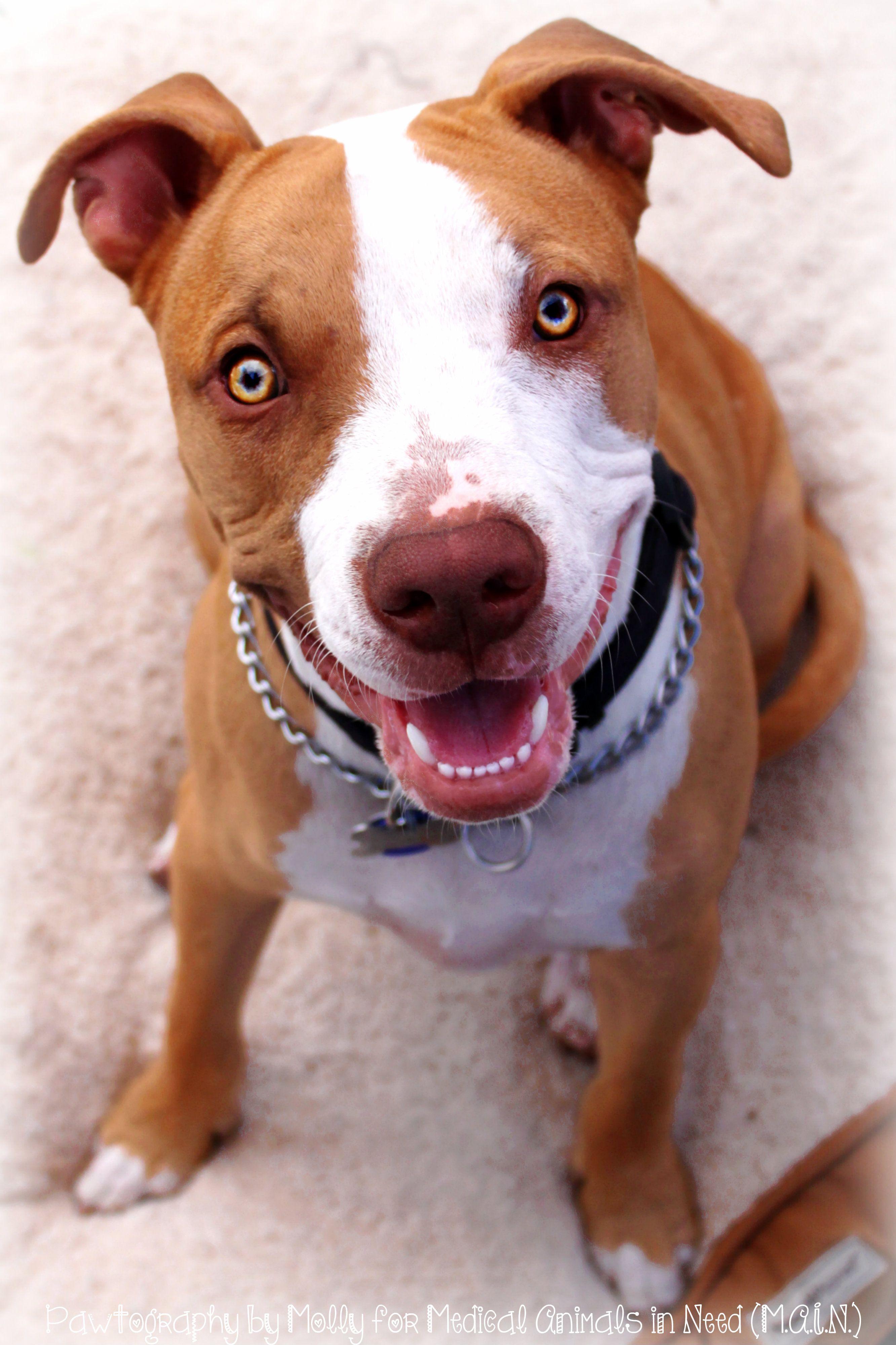Pitbull puppy rescue arizona