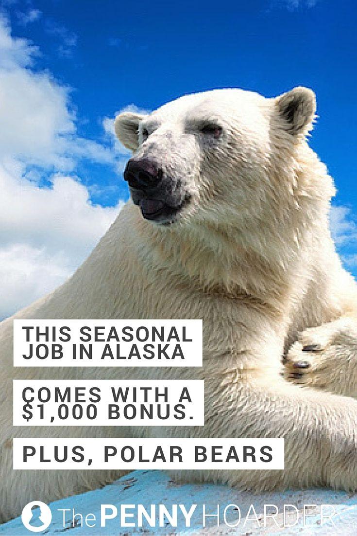 This Seasonal Job In Alaska Comes With A 1 000 Bonus Plus Polar Bears Seasonal Jobs Polar Bear Camping Colorado