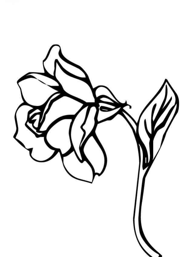 Blumen zum ausmalen | brennkolben | Pinterest