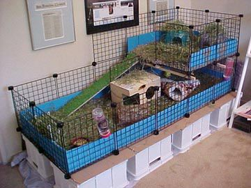 Rabbit housing | Indoor Rabbit Hutches - Pet Forums Community