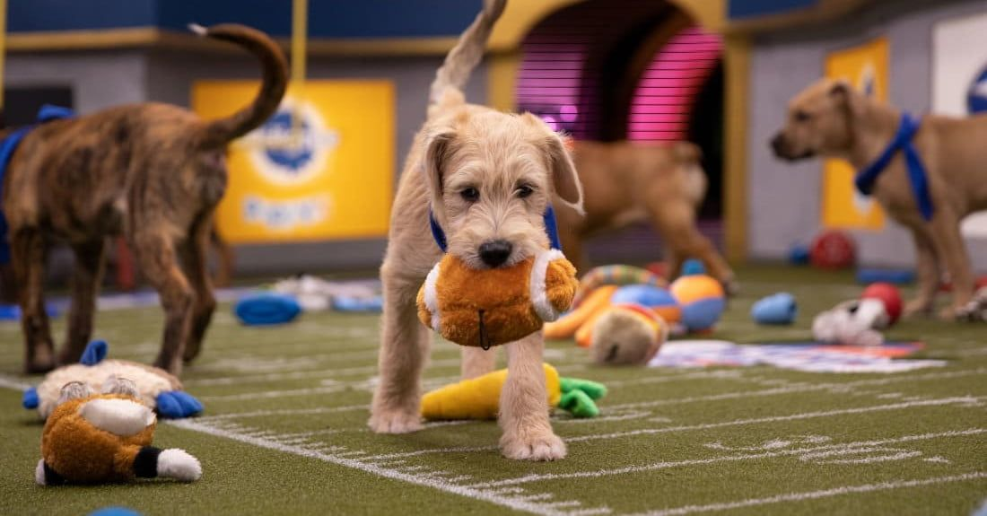 How to Watch the 2020 Puppy Bowl and Kitten Bowl в 2020 г