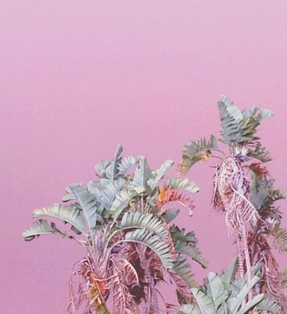 plants #pink #wall