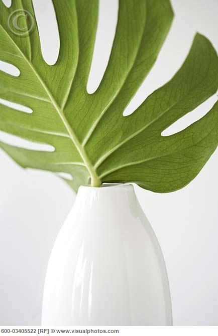 Tropical Leaf In White Vase Stock Photos Royalty Free Royalty Free Photos White Vases Tropical Leaves Tropical Interior Design 78 likes · 21 talking about this. tropical leaf in white vase stock