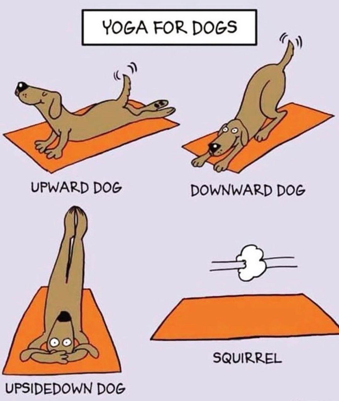 Yoga Meme Upward Dog Yoga Meme Dog Yoga