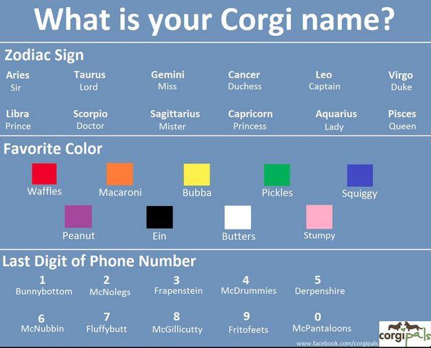 What Is Your Corgi Name Funny Pinterest Funny Corgi Names