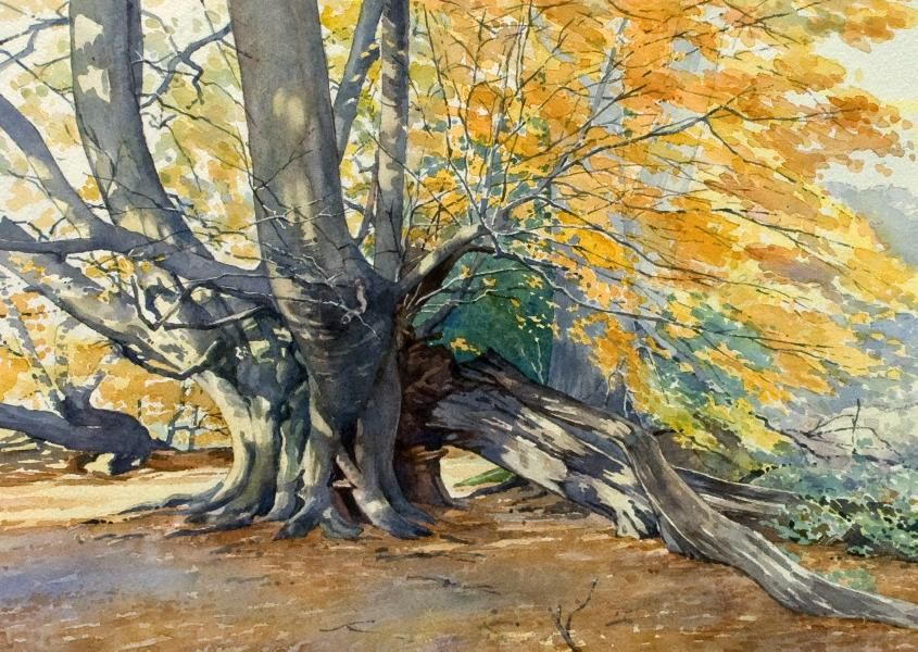 Image result for beech tree art