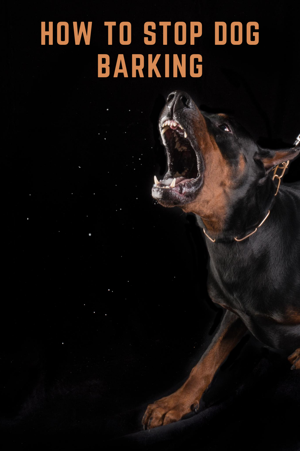 How to Stop Your Dog From Barking Excessively #doglover #dogtraining #doglife #doglover #dogtrainingadvice