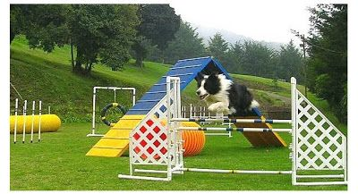 The Playful Pup Dog Obstacle Course Dog Den Sporting Dogs Dog