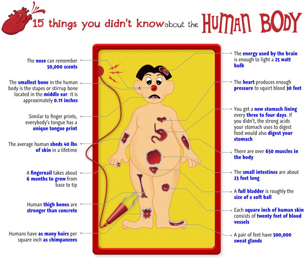 15 Human Body Facts Human Body Bodies And Human Body Facts