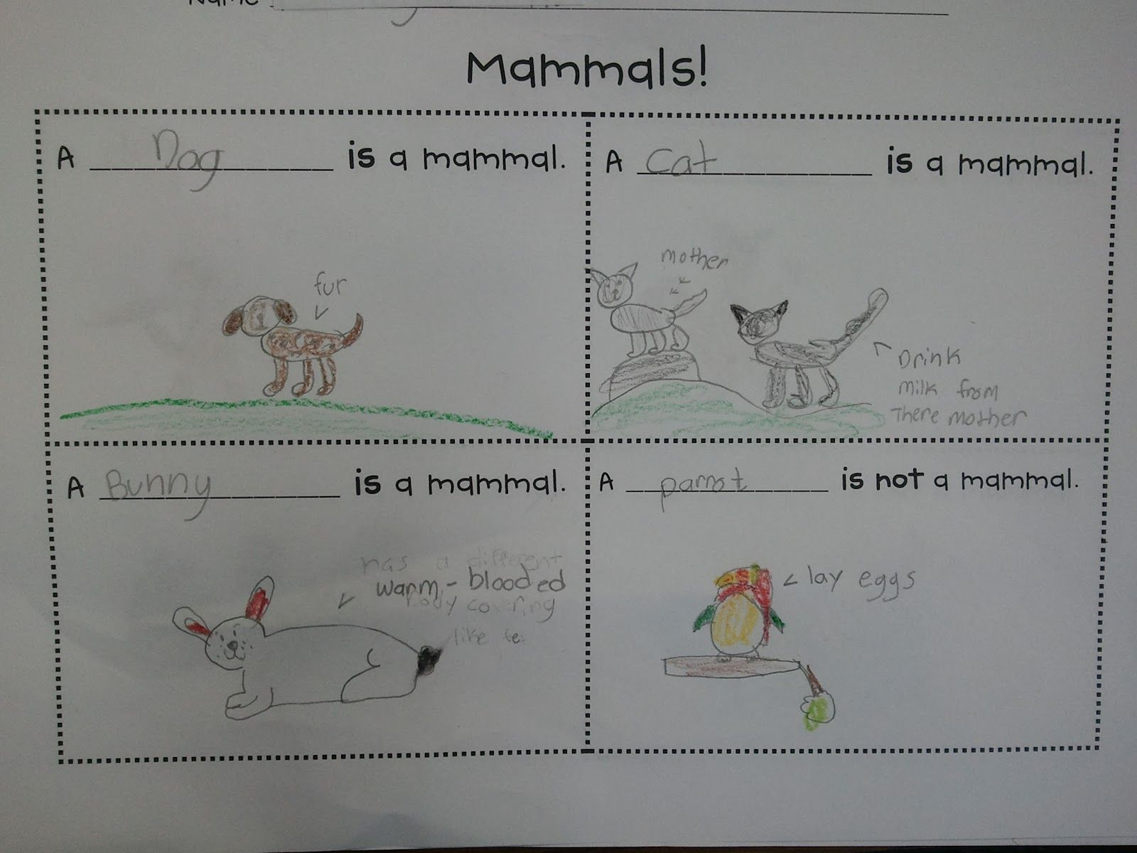 Stepping Into First Grade Math Mammals Mother S Day And