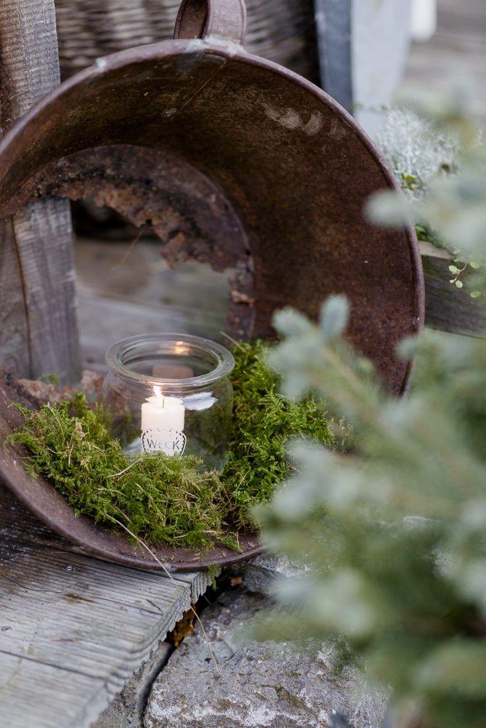 Photo of Magia navideña en el jardín de noviembre • Pomponetti